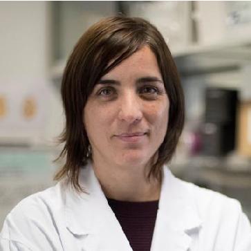 Cèl·lules Mare per generar micro-òrgans investigadora principal, Nuria Montserrat l'Institut de Bioenginyeria de Catalunya (IBEC)